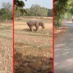 ادیشا: فیلها ویران می کنند ، روستاییان شبهای بی خوابی را در مایوربنج می گذرانند |  اخبار