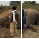 جبالپور: 2 نفر در ارتباط با مرگ مرموز فیل ها دستگیر شدند |  اخبار