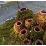 هند اولین باغ خزه خود را در نایینیتال |  اخبار