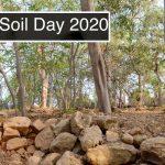 روز جهانی خاک 2020 با هدف محافظت از تنوع زیستی خاک |  اخبار